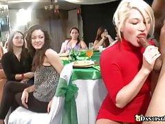 Partygirls können es kaum erwarten, Schwanz zu lutschen
