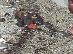 Reifen strand fick auf die felsen !!!!