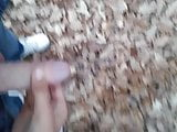forest pee