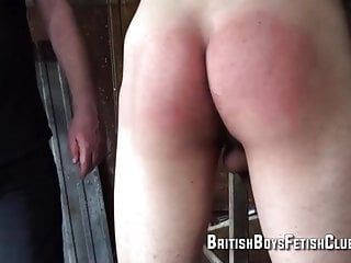Belted Within the Barn