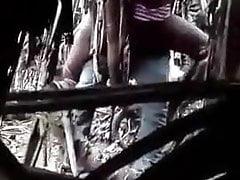 Sri Lankan Doll Poked Inwards Mangrove (kadolana) Forest